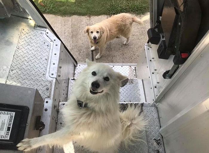 Группа Шона МакКаррена получила название UPS Dogs.