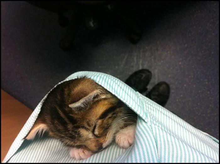 Карманный котенок на посту. Не бдит, но греет душу.