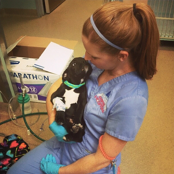 Маленький щенок смотрит на ветеринара с благодарностью.