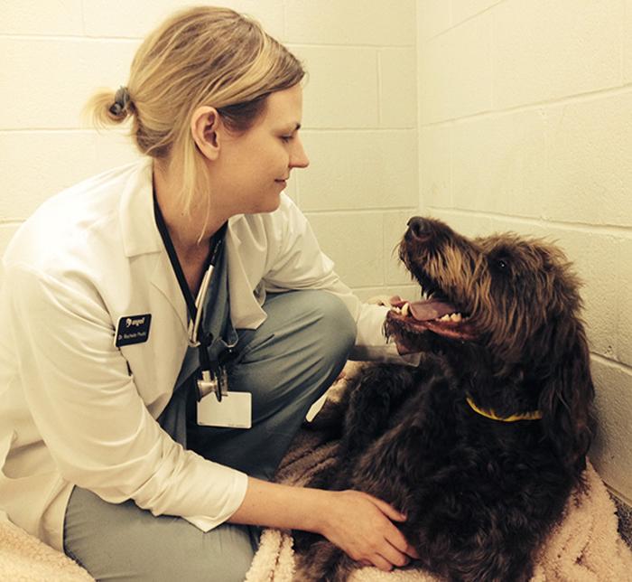 *Эта собака вчера попала в отдел интенсивной терапии. Его ветеринар прислала мне это фото. Теперь я точно знаю, что с собакой все будет в порядке.*