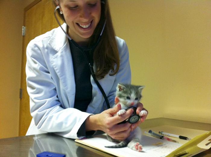 Первый визит котенка к ветеринару.
