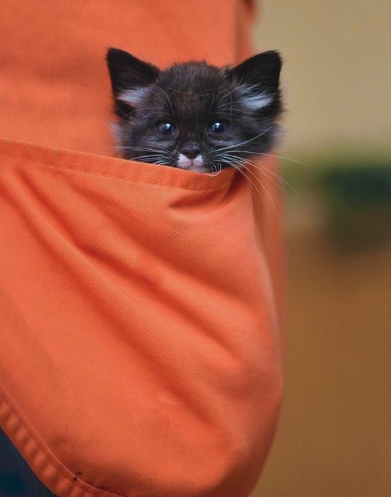 Котенок осматривает клинику со своего поста наблюдателя.