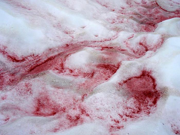 Красный снег в горах.