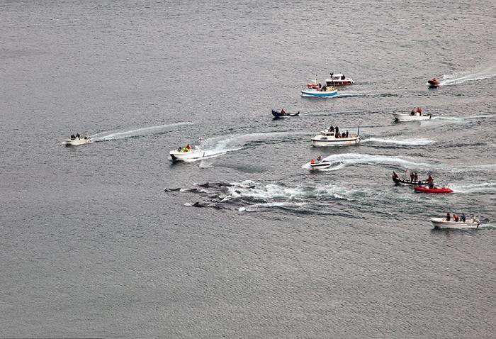 Лодки направляют стаю гринд в залив Судурой в 2012 году.