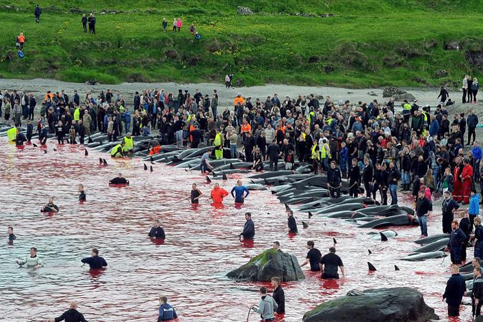 Жители островов собираются у залива, в котором происходит забой дельфинов.
