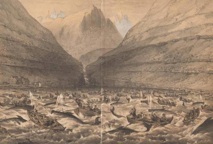 Забой китов в Вестманне, 1854 год.