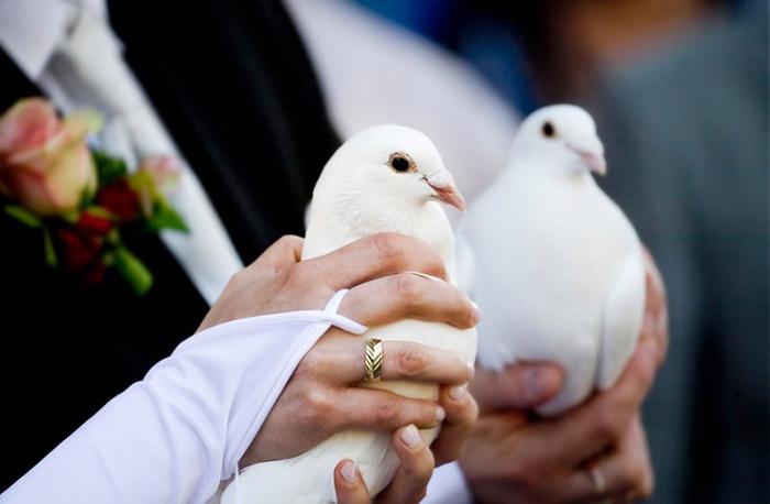 Белые голуби «насчастье».