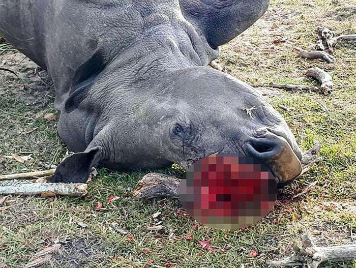 20-летнюю Беллу нашли мертвой с отпиленным остатком удаленного рога.