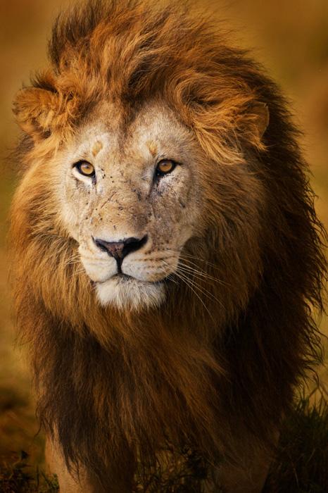 Национальный заповедник Масай Мара в Кении. Автор фото: PIPER MCKAY.