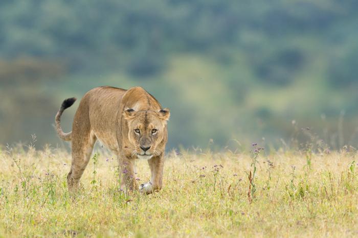 Озеро Накуру в Кении. Автор фото: GERRY VAN DER WALT.