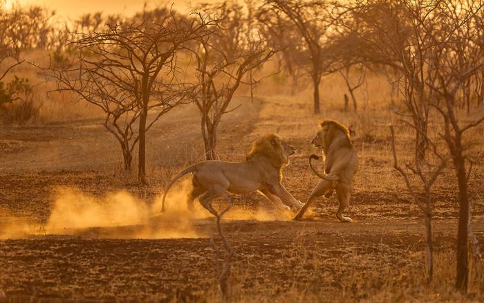 Заповедник Лулуве в ЮАР. Автор фото: ETIENNE OOSTHUIZEN.