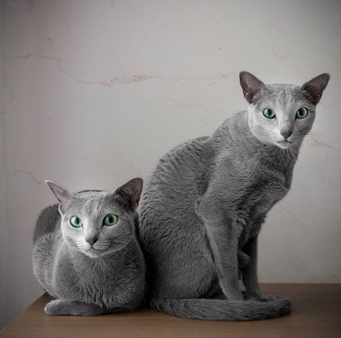 Две сестры Ксафи и Аури.