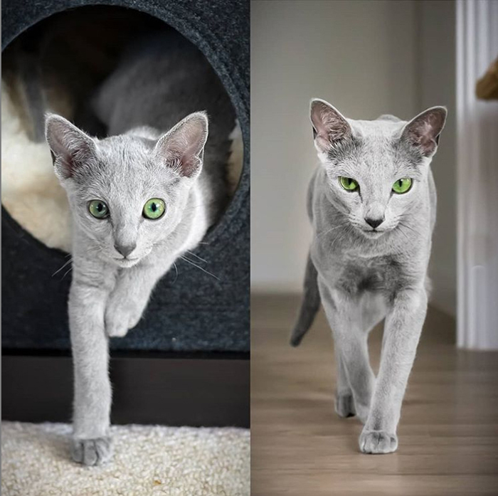 Из котенка во взрослую кошку.