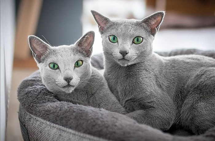Две сестры.