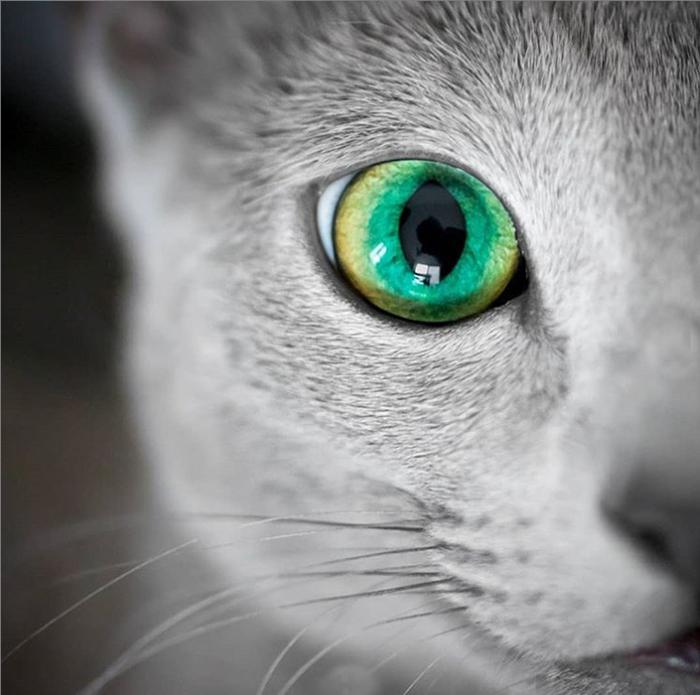 Гипнотические глаза.