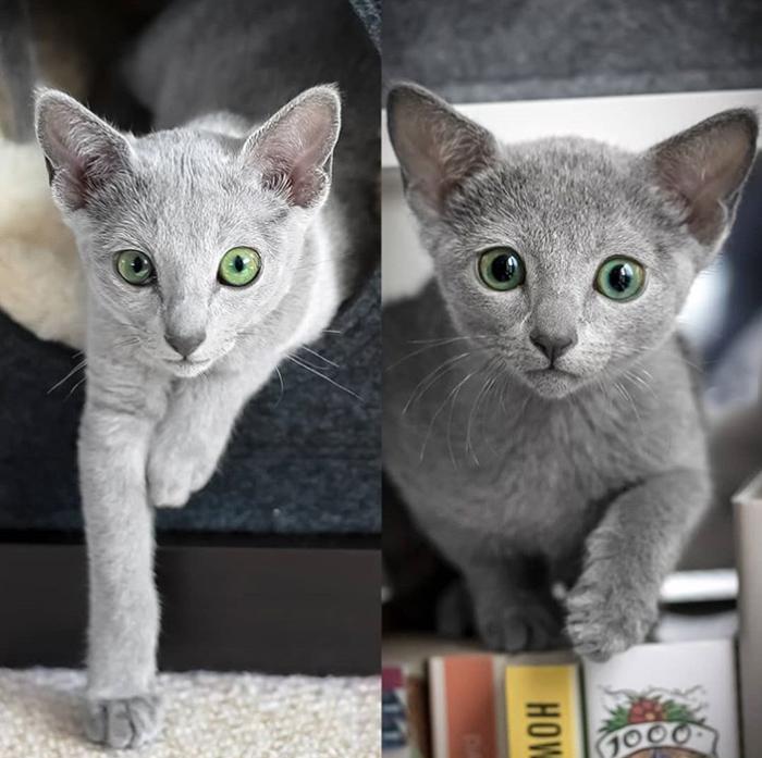 Котята Ксафи и Аури.