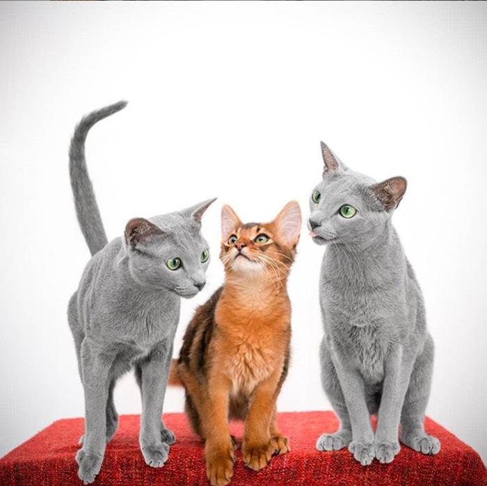 Сестры Ксафи и Аури с подругой.