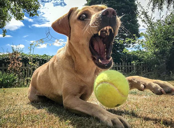 Собака, ловящая мяч. Фото: Kizzy Porter.
