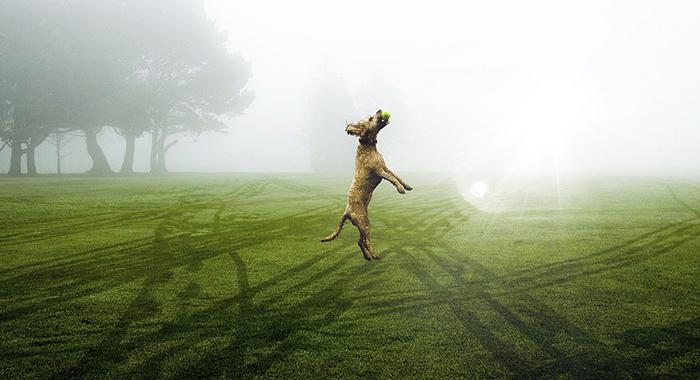 Собака, ловящая мяч. Фото: Ollie Ross.