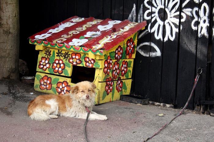 Сторожевая собака тоже живет в расписном доме.