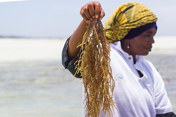 Пучок водорослей в руках у Мванайши.