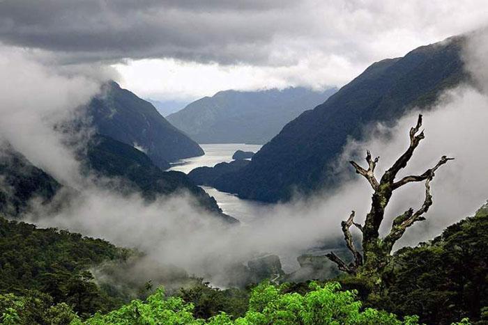 Природа Новой Зеландии.