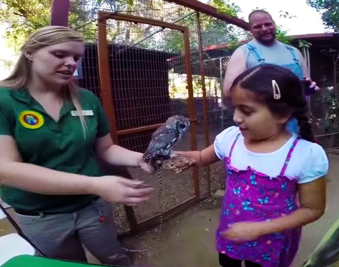 Посетителям центра нравится общаться с необычной совой.