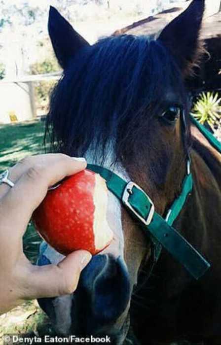 Эту лошадь хозяева выпустили из загона, её нашёл вернувшийся сосед.