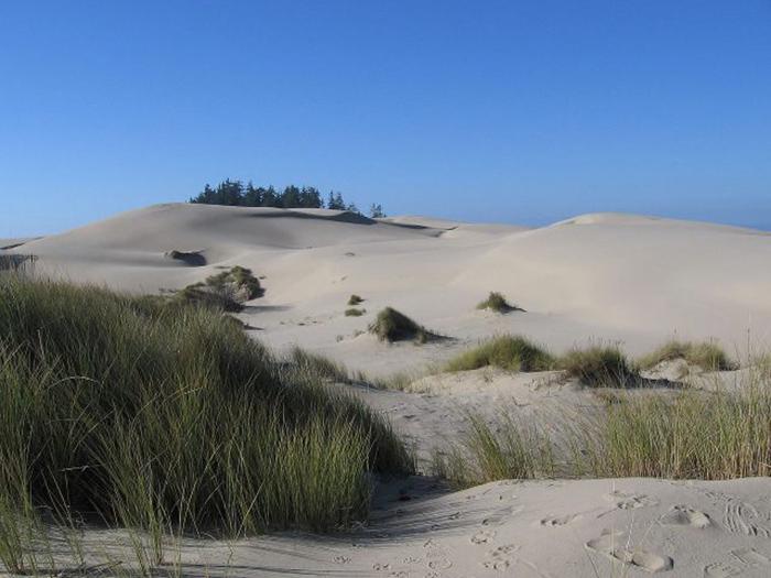Дюны Орегона, недалеко от Флоренции, штат Орегон, послужили источником вдохновения для саги о Дюнах.