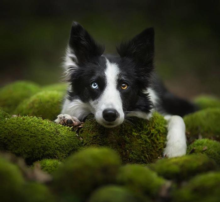 Алиша снимает не только домашних животных.
