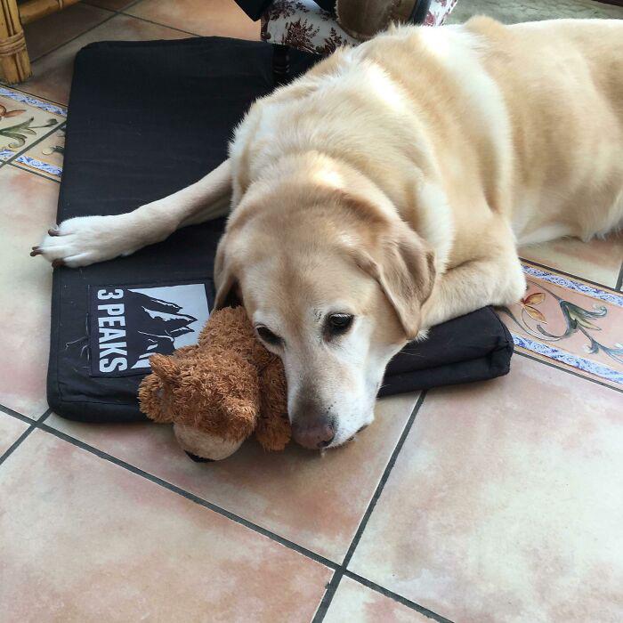 Эта игрушка, которую так любила его сестра. Он с ней не расстаётся с тех пор, как она умерла.