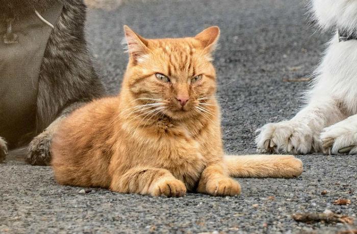 Азмаэль считает себя полноправным членом собачьей стаи, даже взгляд соответствующий.