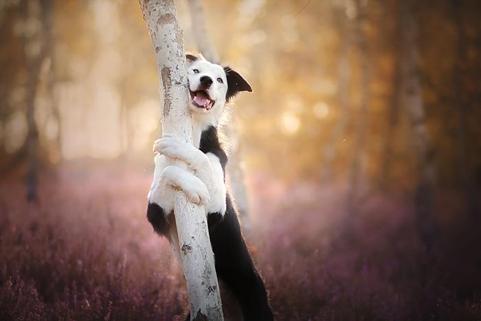 Собаки в приютах часто бывают равнодушными ко всему.
