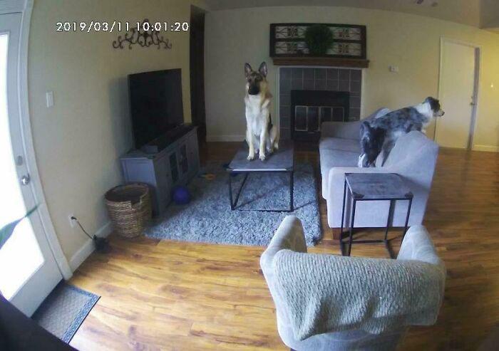 У меня есть камера с прямой трансляцией, чтобы я мог видеть, чем занимаются мои собаки, пока я на работе. И вот чем.
