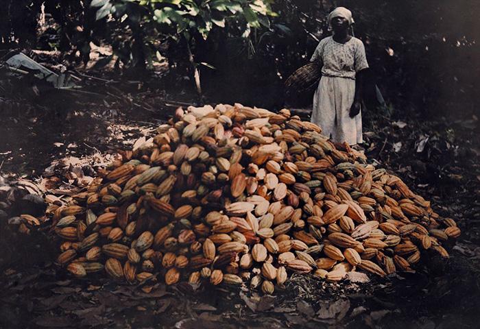 Когда в Америке местных работников выкосили эпидемии, туда стали привозить рабов из Африки.