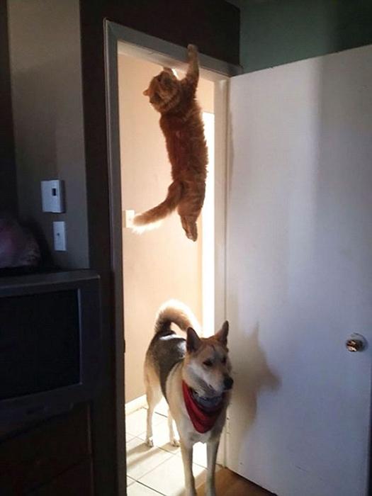 Кот-ниндзя.