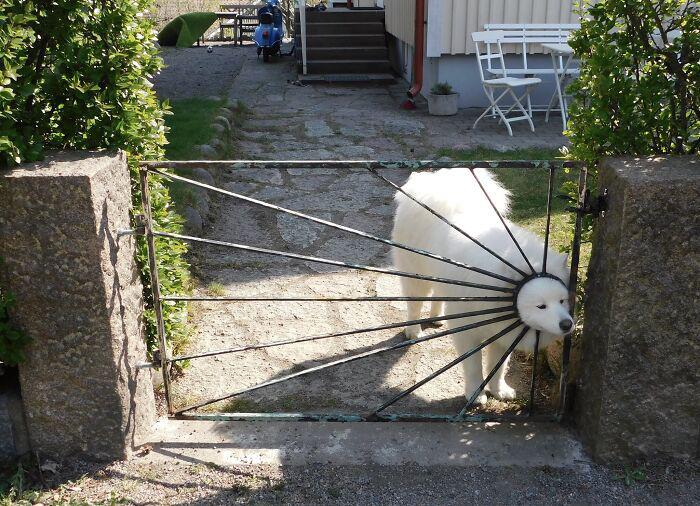 Пушистый белый медведь.