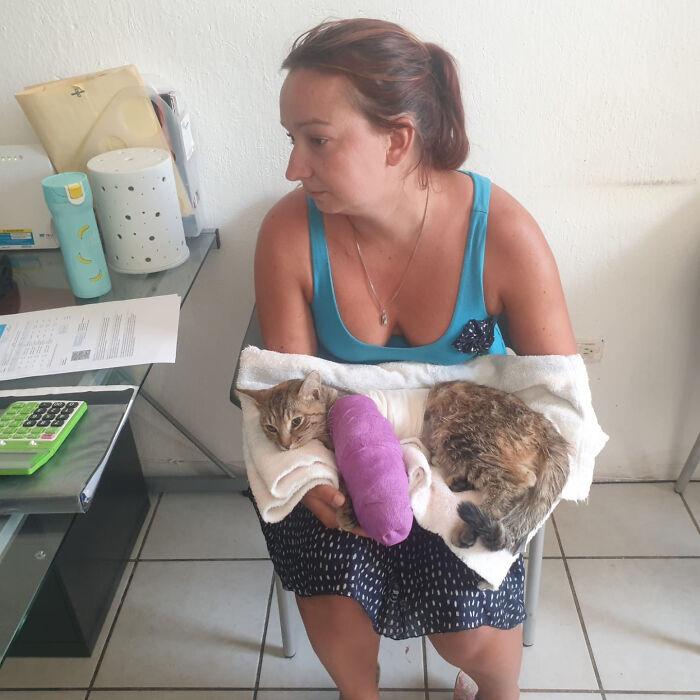 Из драки кошка выбралась со сломанной лапой.
