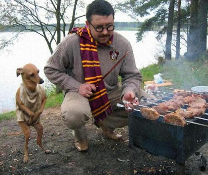 Когда твоя собака косплеер лучше тебя.