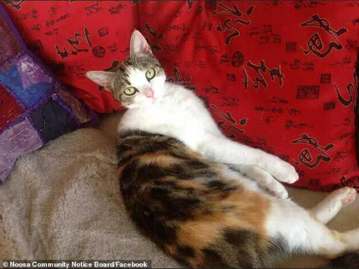 Кошечке повезло,её нашли соседи.