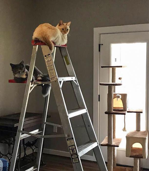 Кажется, я потратил деньги на кошачье дерево совершенно зря.