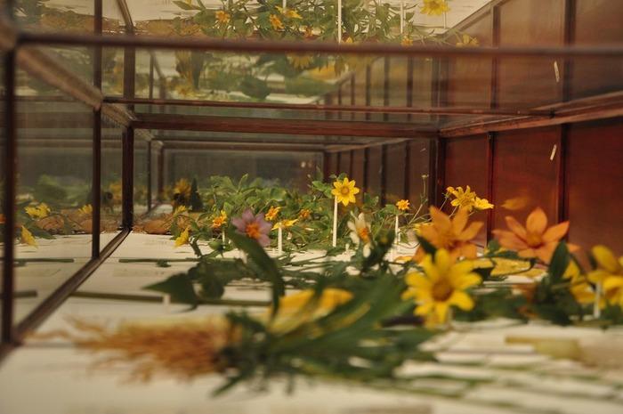 Коллекция работ Блашка в музее Гарварда.