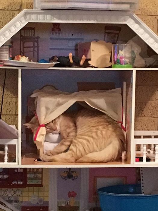 Кошка залезла в кукольный домик и фактически воспользовалась тамошней кроватью.