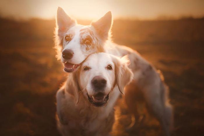 Алиша Змысловска знает много хитростей для работы с собаками в качестве моделей.