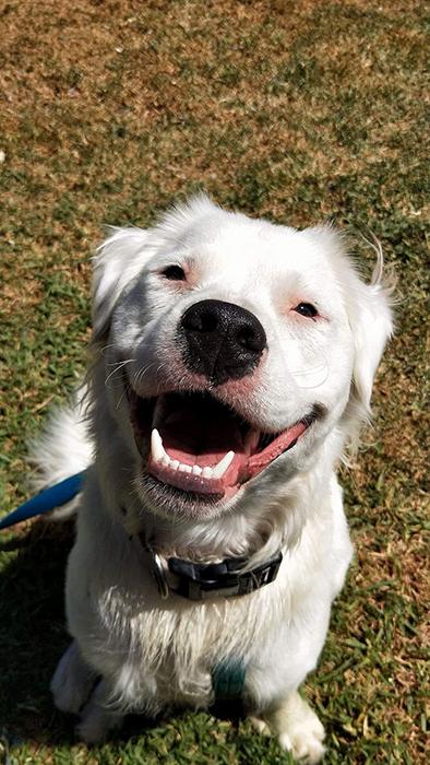 Когда Шерил Смит познакомилась с Широ - она просто влюбилась в этого очаровательного пса.