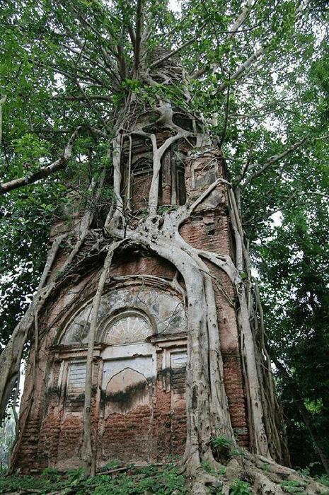 Дерево пытается поглотить храм.
