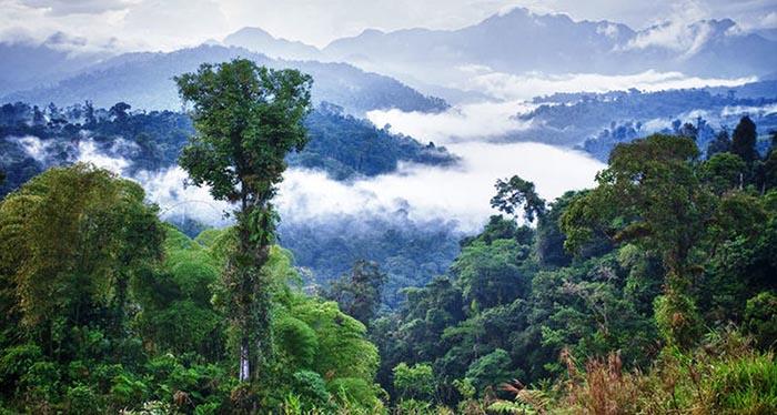 Сведения о древних народах Амазонии известны с 16 века.