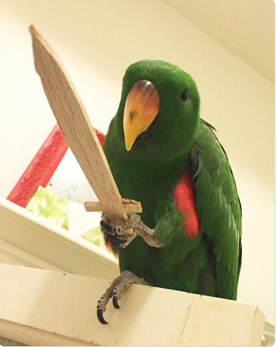 Очень грозный попугай.