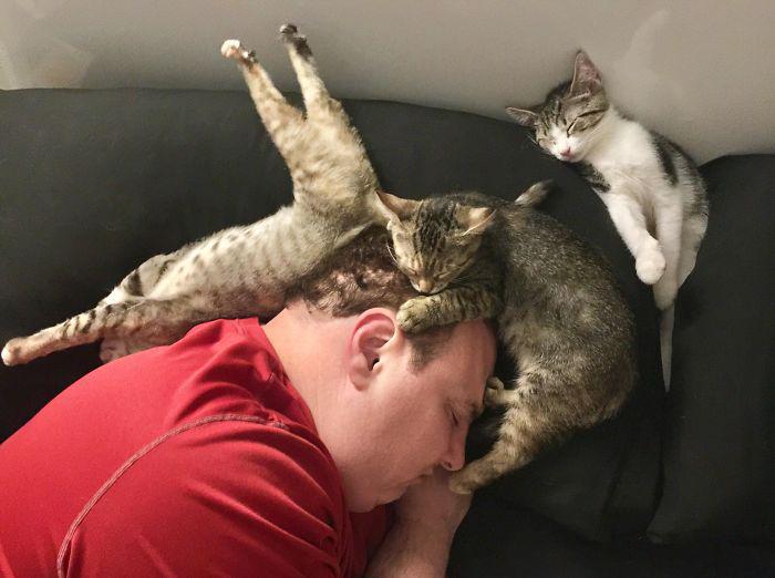 «Прошлой ночью я читала в постели, когда обнаружила, что мой муж и наши приёмные котята так крепко спали».
