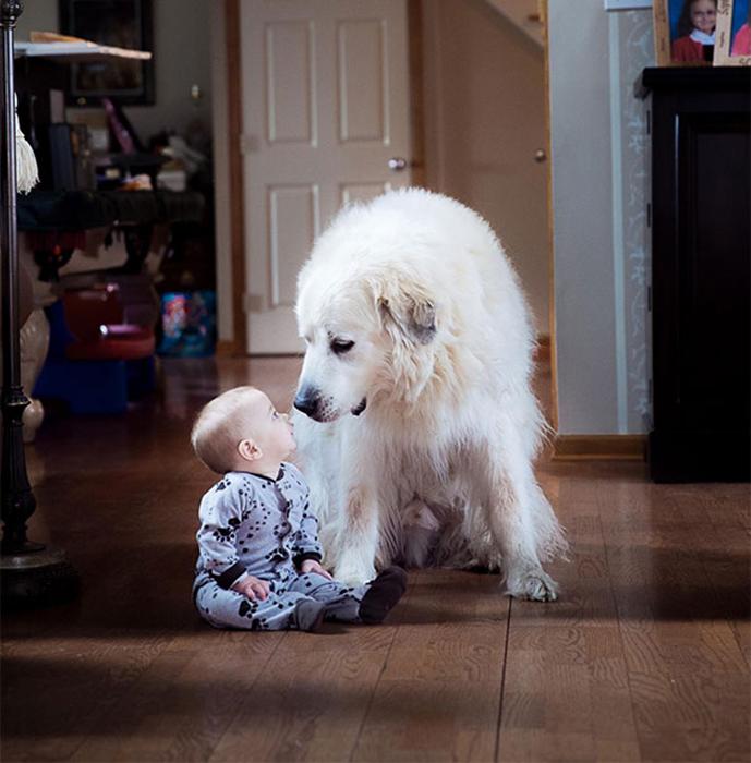 7-месячный мальчик сидел и играл, когда большой пёс подошёл и сел рядом с ним. Один из величайших моментов, который был запечатлён.